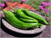 Fresh Hatch NM Green Chili Chile Pepper Pods